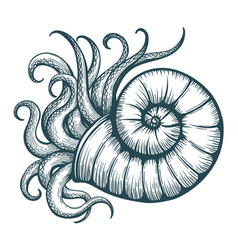 Sea shell with mollusc tentacles vector