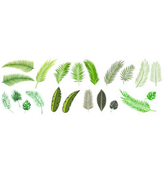 Tropical palm leaves set vector