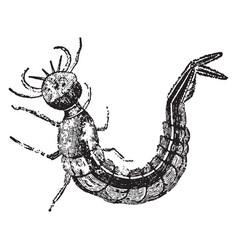 water beetle larva vintage vector image