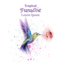 Watercolor humming bird tropic paradise vector