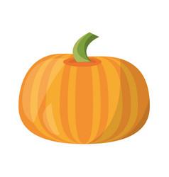 pumpkin vegetable natural vector image