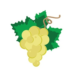 White grape with leaf vector image vector image
