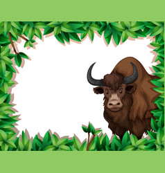 A yak on nature frame vector