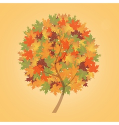 Autumn tree maple vector