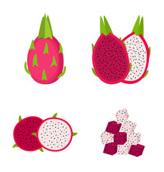 dragon fruit whole fruit half and slices vector image