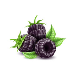 Realistic blackberry juicy fruit with leaf vector