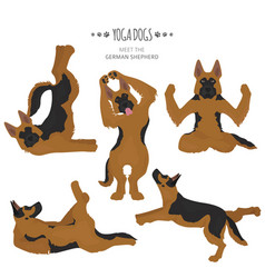 yoga dogs poses and exercises german shepherd vector image