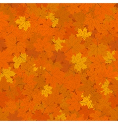 Fallen Orange Maple Leaves vector image