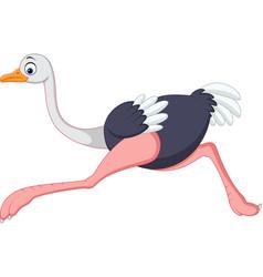 Cartoon ostrich running vector