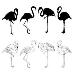 Flamingo flamingo set vector