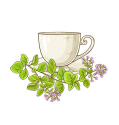oregano tea vector image