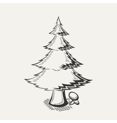 spruce on white background vector image