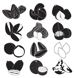 Edible Nuts Collection vector image