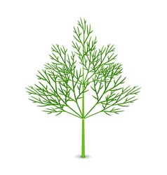 fresh dill isolated on white vector image vector image