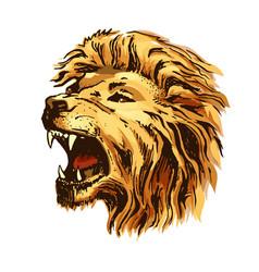 sketch color lion head vector image