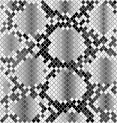Skin of snake vector image vector image