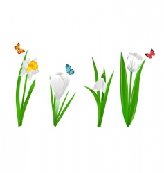 white spring flowers vector image vector image