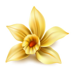 3d vanilla flower blossom or narcissus vector
