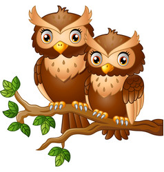 cute couple owl on the tree branch vector image