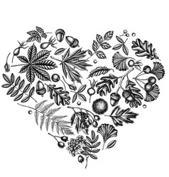 Heart design with black and white fern dog rose vector