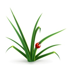 Ladybug and grass vector image