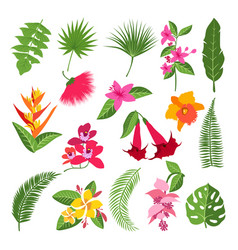 exotic tropical flowers and leaves vector image
