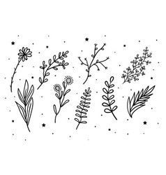 mystical flowers and branches and leaves vector image