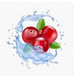 Ripe cranberries in water splash realistic vector