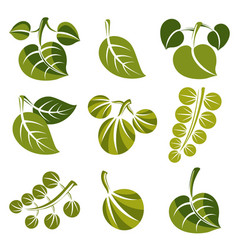 set of green spring leaves isolated on white vector image