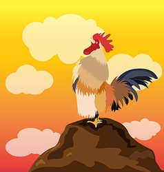 Chicken rooster crowing vector