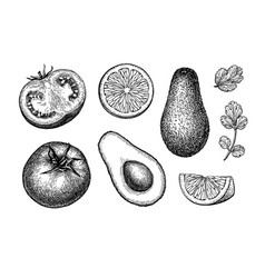 guacamole sauce ingredients vector image