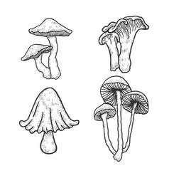 Mushroom set sketch engraving vector