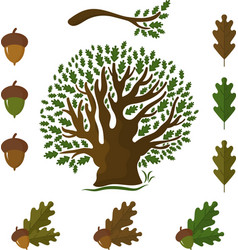 Set of icons on an oak tree with leaves and acorns vector
