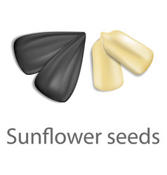 sunflower seeds mockup realistic style vector image