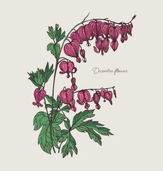 bleeding heart flower hand drawn colorful vector image vector image