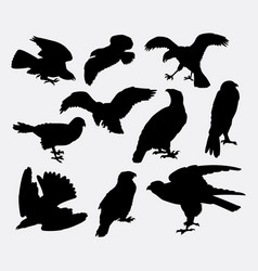 falcon eagle and hawk bird silhouette vector image