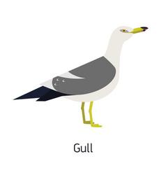 herring gull or seagull isolated on white vector image