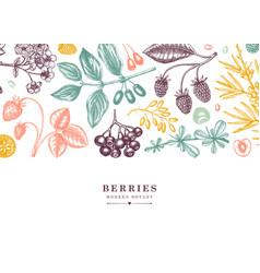 Seasonal berries banner in engraved style wild vector