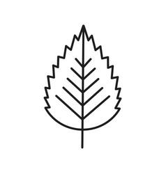 Birch leaf linear icon vector