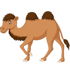 Cute camel cartoon isolated on white background vector