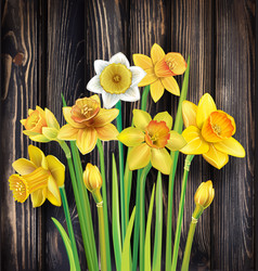 daffodils flowers on the wooden background vector image
