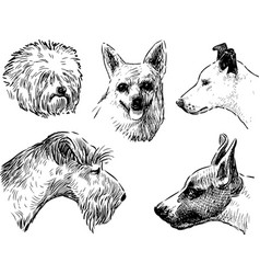 Heads various dogs vector