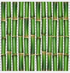 bamboo grass oriental wallpaper vector image