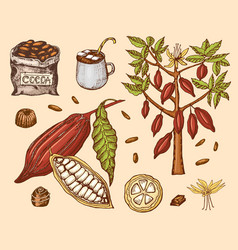 cocoa beans and hot chocolate natural organic vector image