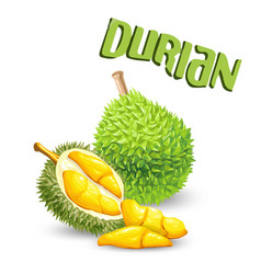 fruit durian white background image vector image