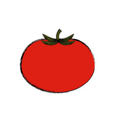 Tomato vegetable natural vector