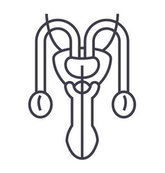 male sexual organs line icon sign vector image