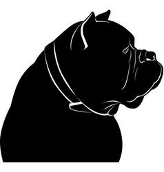 dog cane corso vector image vector image