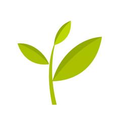 tea plant icon flat style vector image