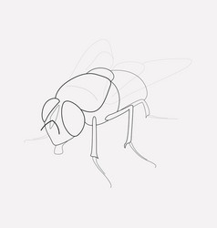 Fly icon line element of fly vector